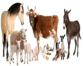 List of News For Animal Husbandry, Dairying and Fisheries on searchdonation.com